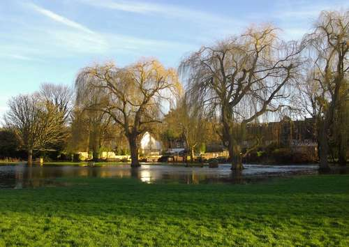 willows_at_cm__2_